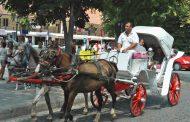 Файтонджиите в Созопол: Грижим се добре за конете! Карат смени по 6 часа /СНИМКИ/