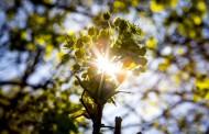 Астрономическата пролет настъпва в 12,28 ч.