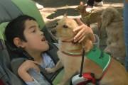 24 октомври става молитвен ден за децата с увреждания
