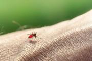 Кои дестинации крият риск да се върнете с малария?