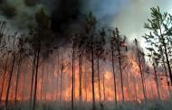 Пламна гората над Свети влас