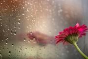 Днес дъжд, утре пак