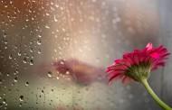 Облачен вторник с дъжд до обяд