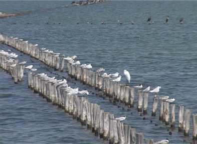 ptici.jpg